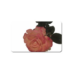 Poppys Last Rose Close Up Magnet (Name Card)