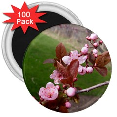 Pink Flowers  3  Magnets (100 pack)
