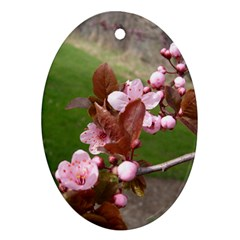 Pink Flowers  Oval Ornament (Two Sides)
