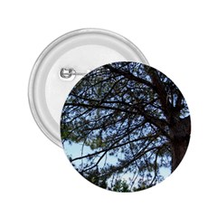 Pine Tree Reaching 2.25  Buttons
