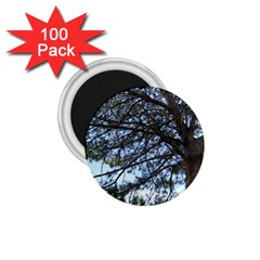 Pine Tree Reaching 1 75  Magnets (100 Pack)