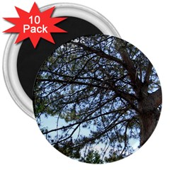 Pine Tree Reaching 3  Magnets (10 pack)