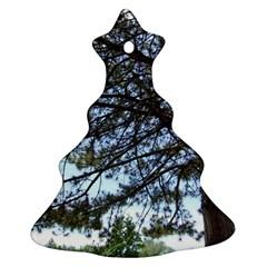 Pine Tree Reaching Christmas Tree Ornament (Two Sides)