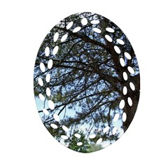 Pine Tree Reaching Oval Filigree Ornament (Two Sides)
