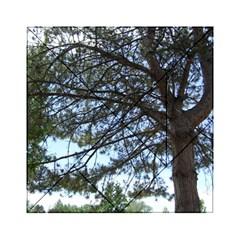 Pine Tree Reaching Acrylic Tangram Puzzle (6  x 6 )