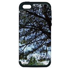 Pine Tree Reaching Apple iPhone 5 Hardshell Case (PC+Silicone)