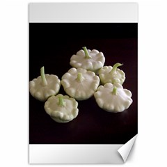 Pattypans  Canvas 20  x 30