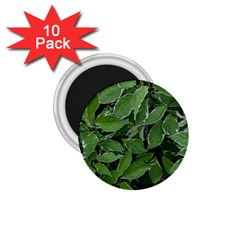 Texture Leaves Light Sun Green 1 75  Magnets (10 Pack)