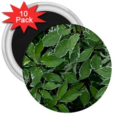 Texture Leaves Light Sun Green 3  Magnets (10 Pack)