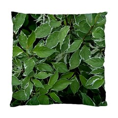 Texture Leaves Light Sun Green Standard Cushion Case (Two Sides)