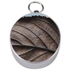 Leaf Veins Nerves Macro Closeup Silver Compasses