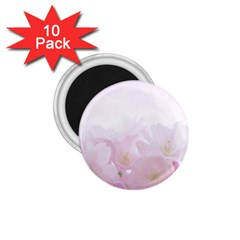 Pink Blossom Bloom Spring Romantic 1.75  Magnets (10 pack)