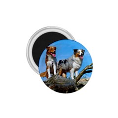 mini Australian Shepherd group 1.75  Magnets