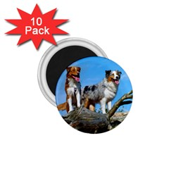 mini Australian Shepherd group 1.75  Magnets (10 pack)
