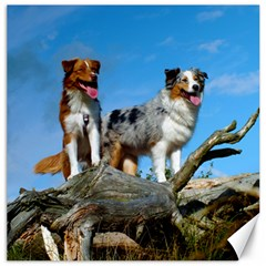 mini Australian Shepherd group Canvas 16  x 16