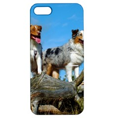 mini Australian Shepherd group Apple iPhone 5 Hardshell Case with Stand