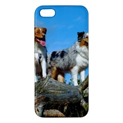 mini Australian Shepherd group Apple iPhone 5 Premium Hardshell Case