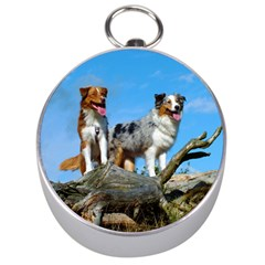 mini Australian Shepherd group Silver Compasses