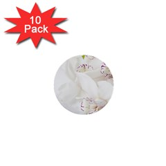Orchids Flowers White Background 1  Mini Buttons (10 pack)
