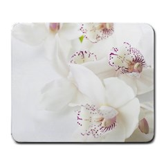 Orchids Flowers White Background Large Mousepads