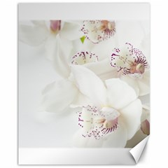 Orchids Flowers White Background Canvas 11  X 14