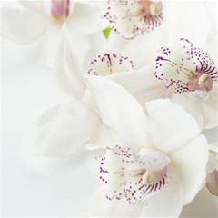 Orchids Flowers White Background Magic Photo Cubes