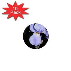 Bearded Iris 1  Mini Buttons (10 pack)