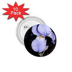 Bearded Iris 1.75  Buttons (10 pack)