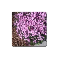 Butterfly On Purple Flowers Square Magnet