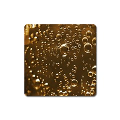 Festive Bubbles Sparkling Wine Champagne Golden Water Drops Square Magnet