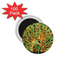 Unusual Peacock Drawn With Flame Lines 1 75  Magnets (100 Pack)