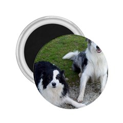 2 Border Collies 2.25  Magnets