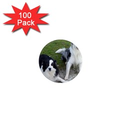 2 Border Collies 1  Mini Magnets (100 pack)