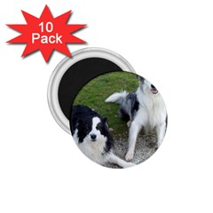 2 Border Collies 1.75  Magnets (10 pack)
