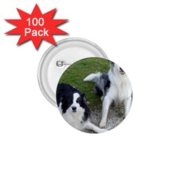 2 Border Collies 1.75  Buttons (100 pack)