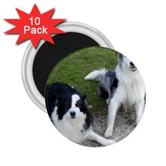 2 Border Collies 2.25  Magnets (10 pack)
