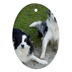 2 Border Collies Oval Ornament (Two Sides)