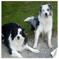 2 Border Collies Canvas 20  x 20