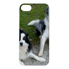 2 Border Collies Apple iPhone 5S/ SE Hardshell Case