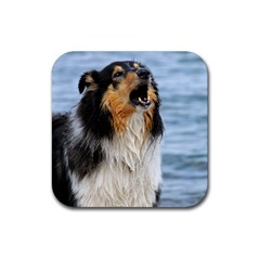 Black Tri Border Collie Wet Rubber Square Coaster (4 pack)