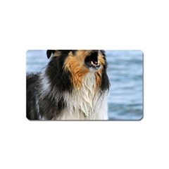 Black Tri Border Collie Wet Magnet (Name Card)