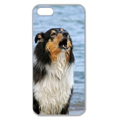 Black Tri Border Collie Wet Apple Seamless iPhone 5 Case (Clear)