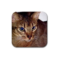 Abyssinian 2 Rubber Coaster (Square)