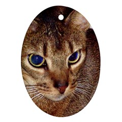 Abyssinian 2 Oval Ornament (Two Sides)