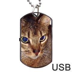 Abyssinian 2 Dog Tag USB Flash (Two Sides)