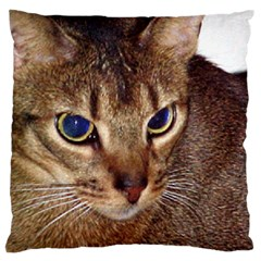 Abyssinian 2 Large Cushion Case (Two Sides)