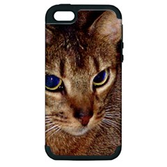 Abyssinian 2 Apple iPhone 5 Hardshell Case (PC+Silicone)