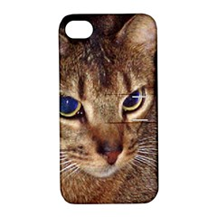 Abyssinian 2 Apple Iphone 4/4s Hardshell Case With Stand