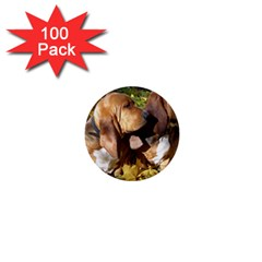 2 Bassets 1  Mini Buttons (100 pack)