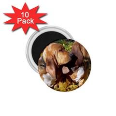 2 Bassets 1.75  Magnets (10 pack)